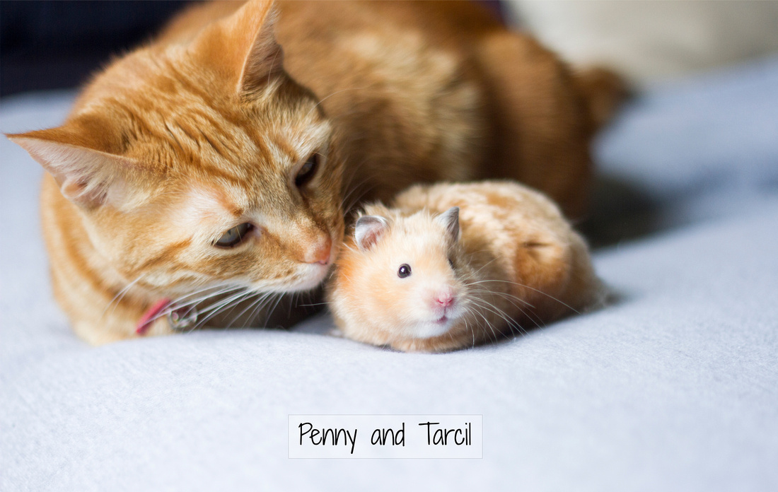 Penny and Tarcil